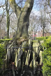 Tombstones stacked around the Hardy Tree in Old St Pancras Church London